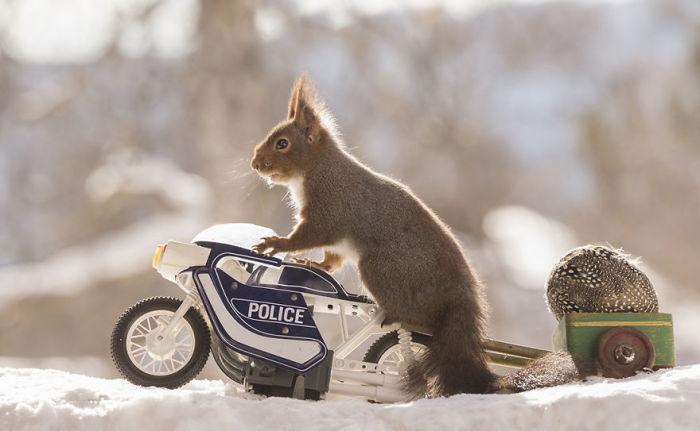 Благодаря храброму полицейскому было найдено одно из украденных пасхальных яиц!