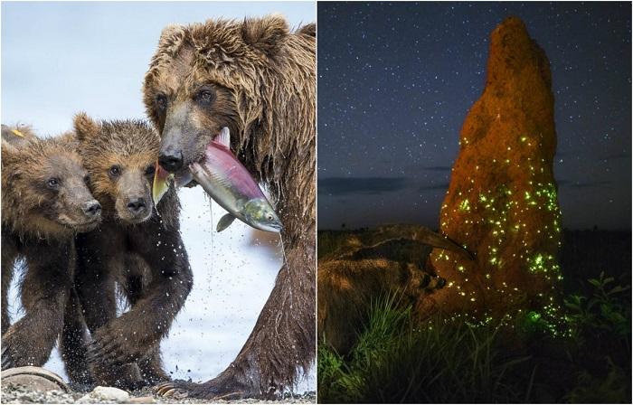 Удивительные снимки, запечатлевшие красоту дикой природы.