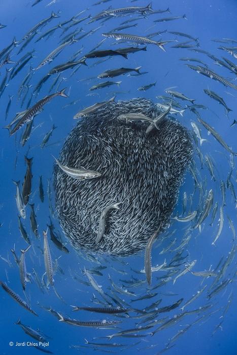 Автор фотографии и финалист в номинации «Под водой» - Хорди Чиас Пуйоль (Jordi Chias Pujol), Испания.