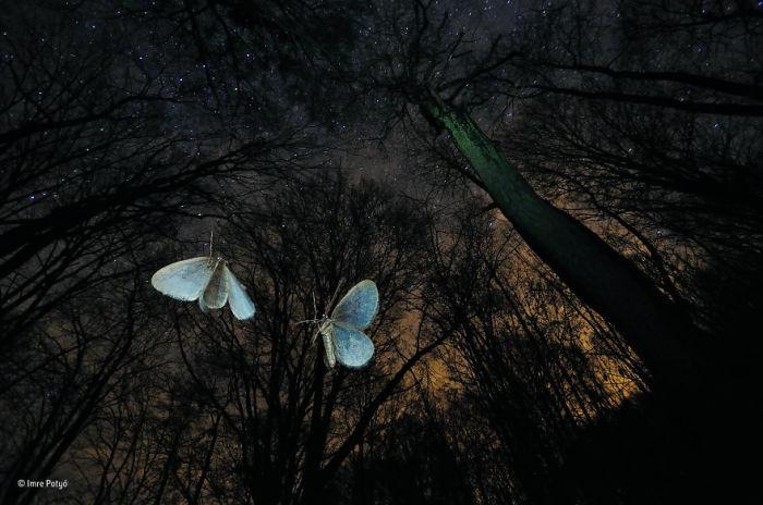 Автор фотографии и финалист в категории «Поведение: беспозвоночные» - Имре Потье (Imre Potyо), Венгрия.