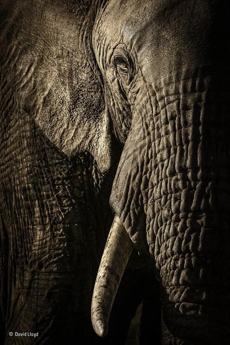 Автор фотографии и финалист в номинации «Портреты животных» - Дэвид Ллойд (David Lloyd), Новая Зеландия / Великобритания.