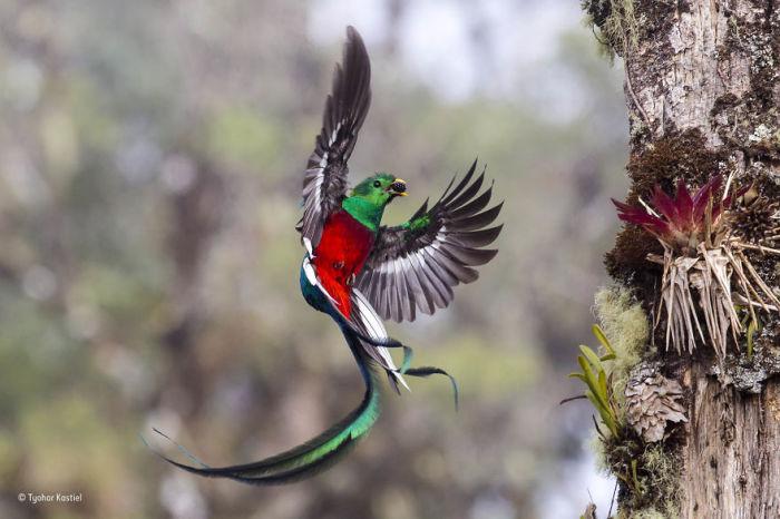 Автор фотографии и финалист в категории «Поведение: птицы» - Тиохар Кастиэль (Tyohar Kastiel), Израиль.
