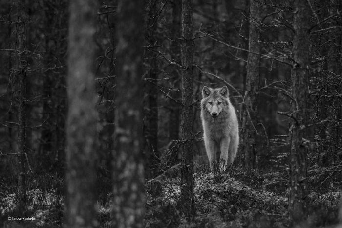 Автор фотографии и финалист в категории «Юный фотограф, возраст 11-14 лет» - Лассе Куркела (Lasse Kurkela), Финляндия.