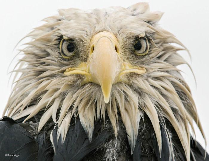 Автор фотографии и финалист в номинации «Портреты животных» - Клаус Нигге (Klaus Nigge), Германия.
