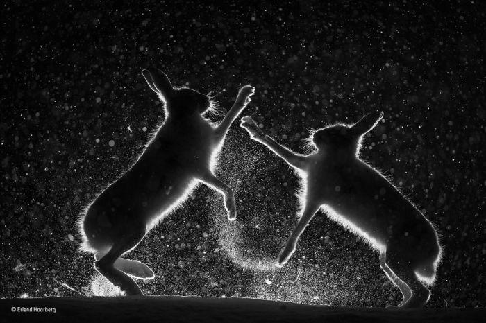 Автор фотографии и финалист в категории «Черное и белое» - Эрлэнд Хаарберг (Erlend Haarberg), Норвегия.