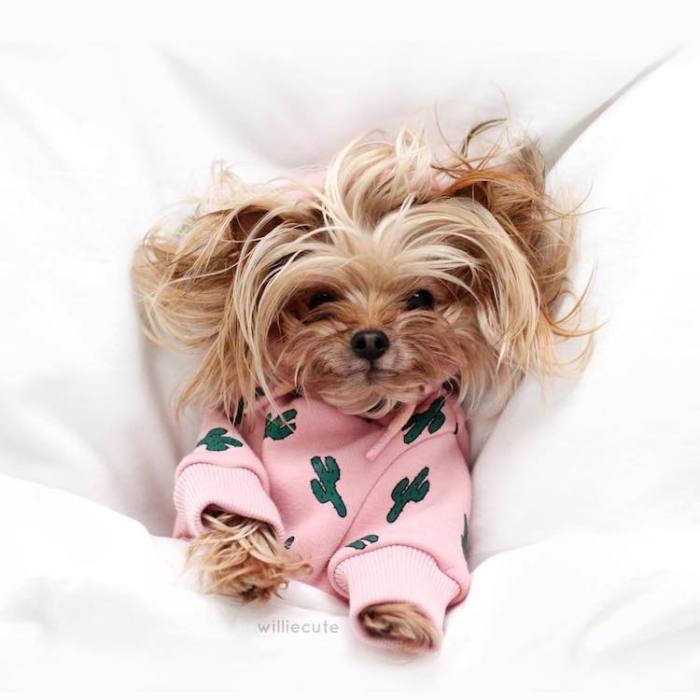 Примерка очередной пижамы.