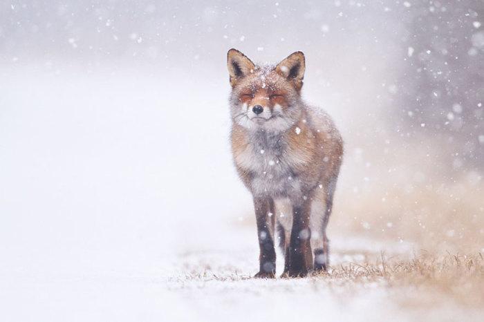Зимой животному труднее выжить, чем летом.