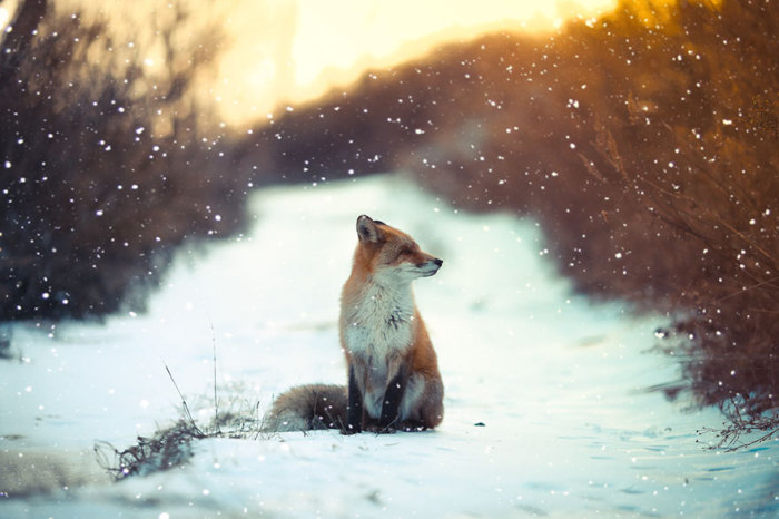 Животное внимательно осматривает свою территорию.