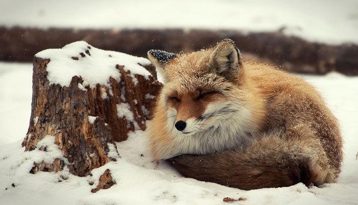 Самое главное пережить суровую зиму.