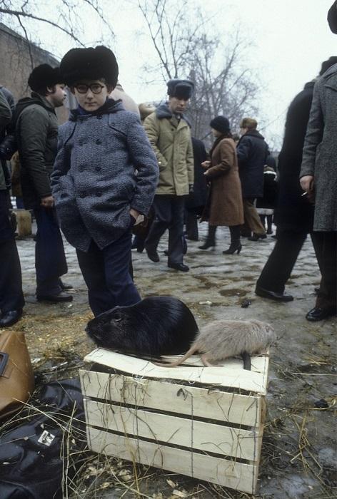Снимок, сделанный фотографом Вальтером Шмитцем. СССР, Москва, 1982 год.