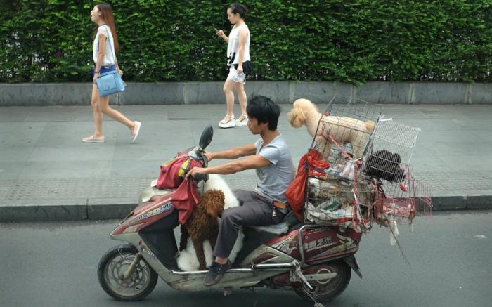 Торговец собаками проезжает на скутере по улицам города Чэнду, Китай предлагая купить пса.