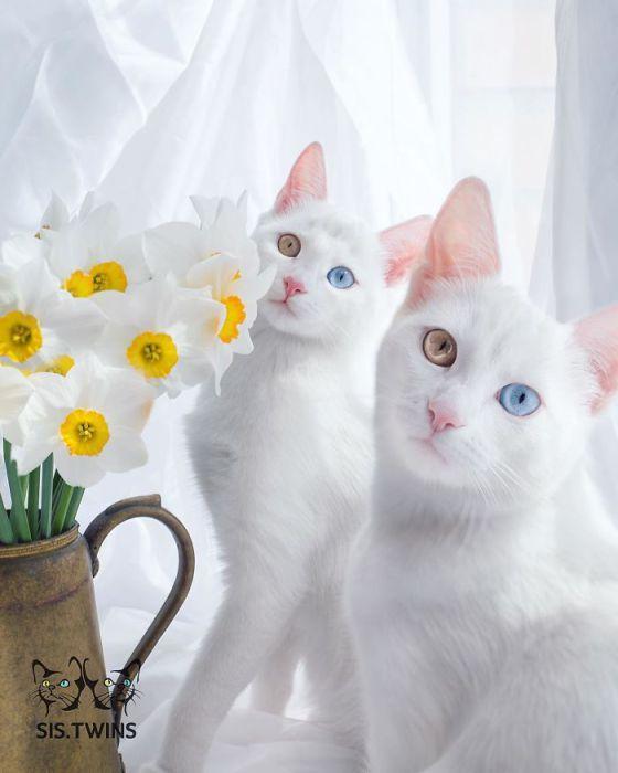 Кошки похожи друг на друга как две капли воды.