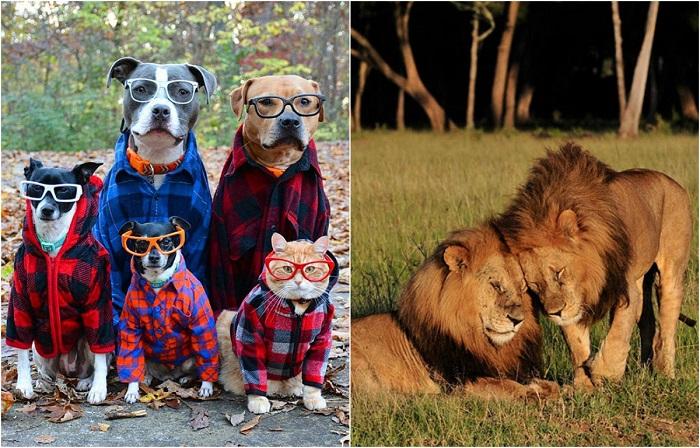 Забавные животные, которые похожи на музыкальные группы.