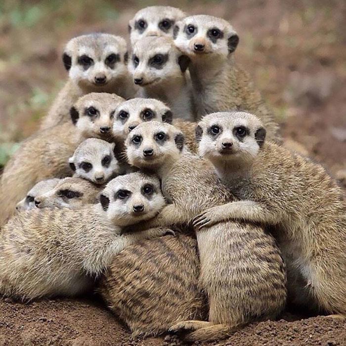 Смешные картинки семья