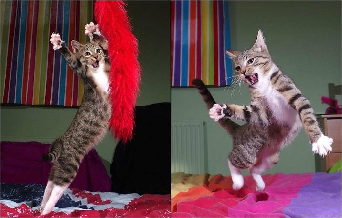 Котенок Эдмунд-сильный, гибкий, грациозный!
