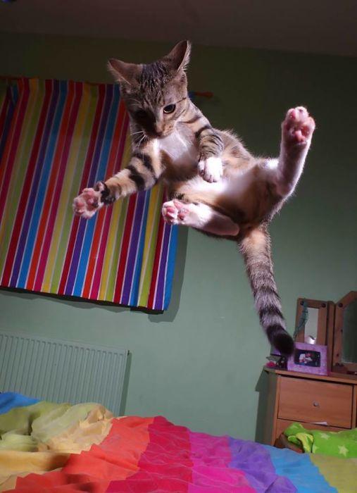Не вызывает сомнений, что тренировки весьма полезны для выработки прыгучести.