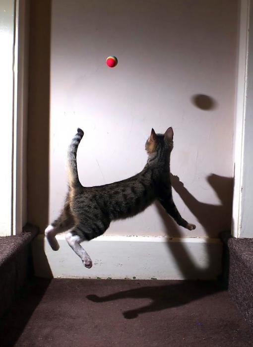 Котенок осваивает новое увлечение в спорте.