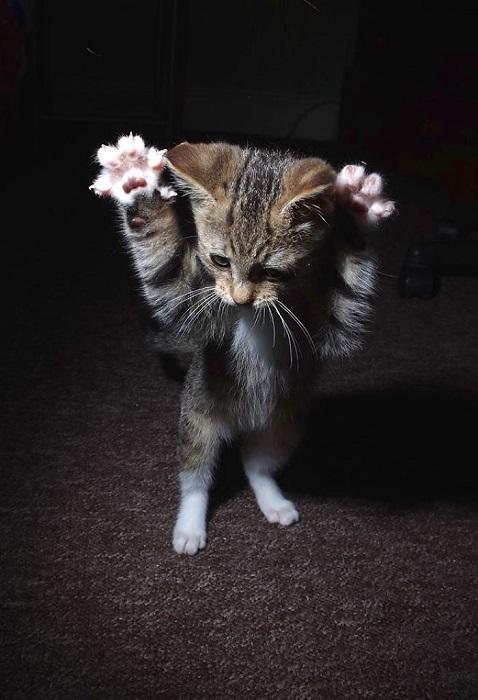 … выпускаю когти и словно тигр бросаюсь на добычу!