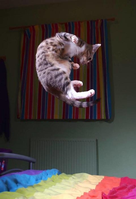 Невероятная гибкость котенка Эдмунда впечатляет!