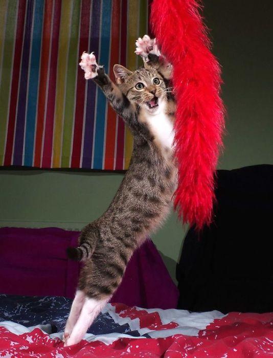 Стильный и грациозный кот-танцор.