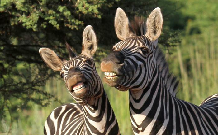 Удивительные животные из разных уголков мира.