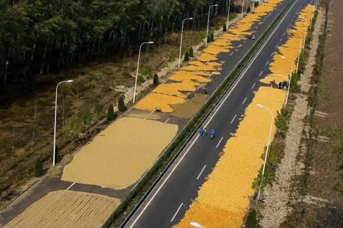 Для сушки зерна китайцы используют автомобильные магистрали.
