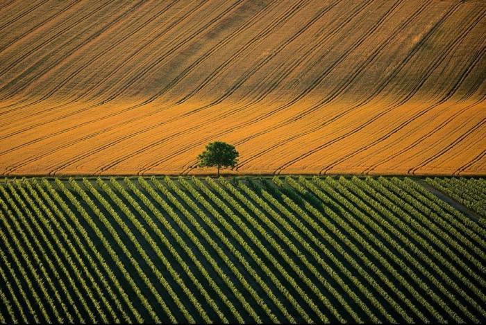 Сельскохозяйственный ландшафт возле города Коньяк во Франция.