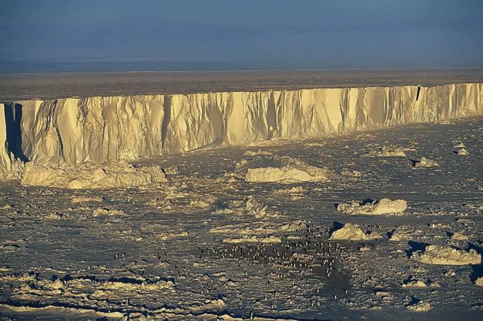 Колония императорских пингвинов расположилась на ледовом поле.