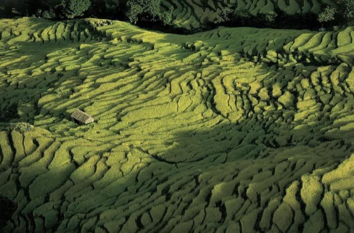 Живописные виды рисовых террас, которые играют на солнце разными зеленоватыми оттенками.