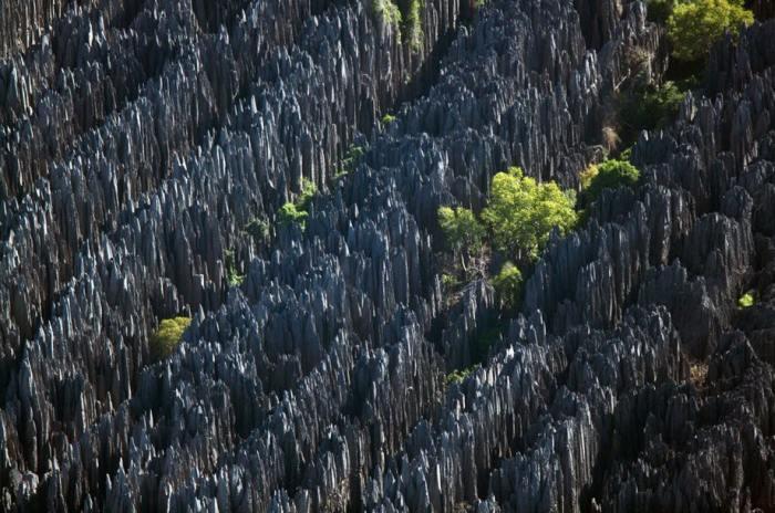 В заповеднике Цинжи-дю-Бемараха скалы известнякового плато образуют настоящий «каменный лес».