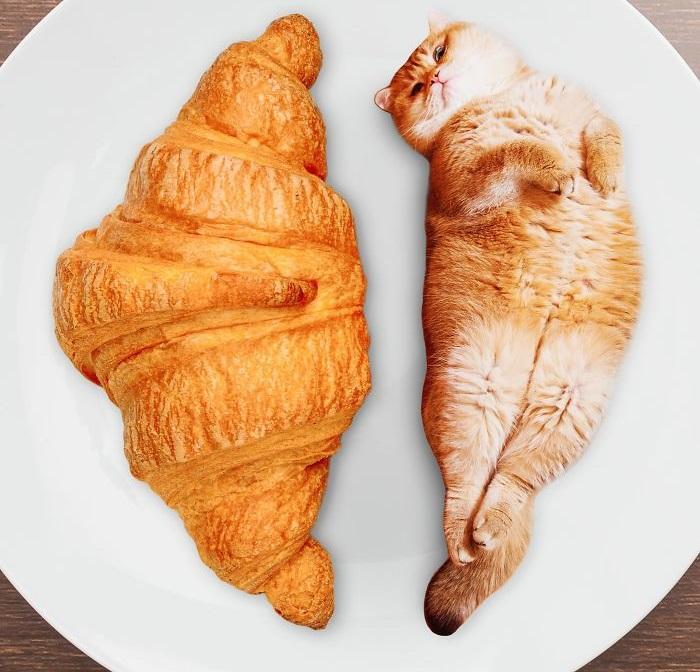 Аппетитный круассан и кот Хосико, который очень похож на него.