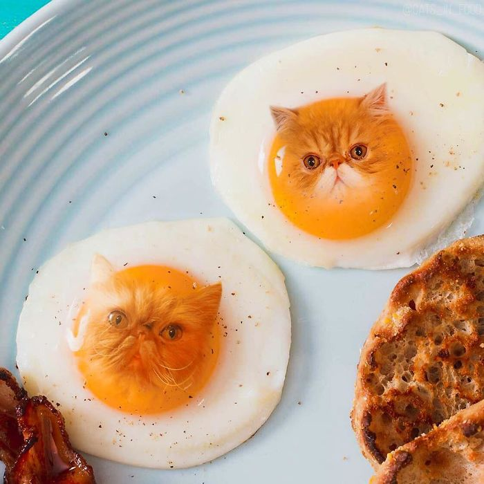 Отражение домашнего любимца в яичном желтке.