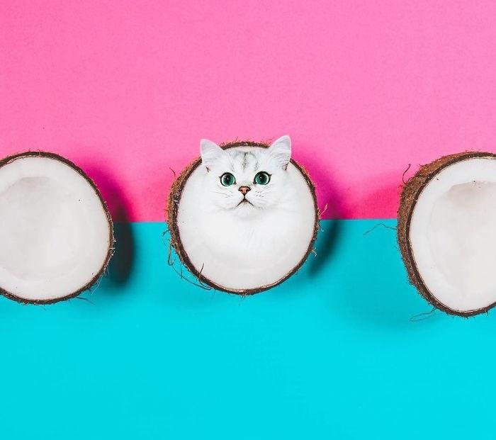 На белом фоне экзотического ореха кота выдают только глаза.