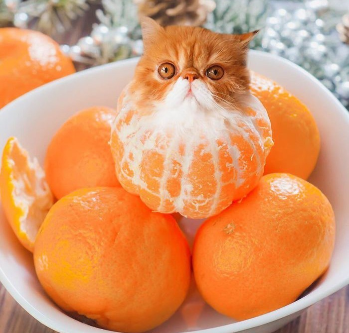 Мандариновый кот.