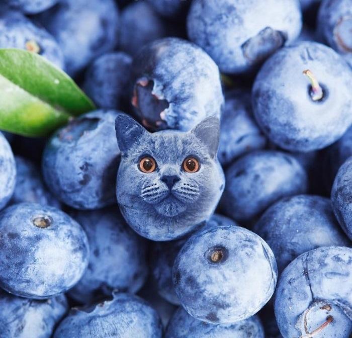 Кот затерялся в иссиня-чёрных ягодах.