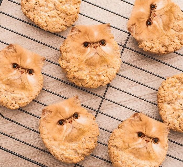 Мордочка рыжего кота смахивает на овсяное печенье.
