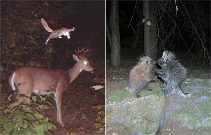 Тайная жизнь диких животных.