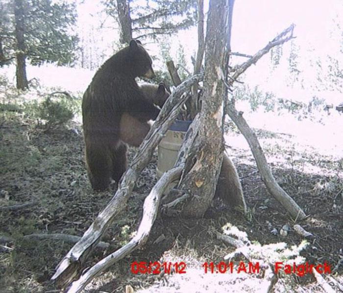 Что настолько сильно могло заинтересовать медвежонка?