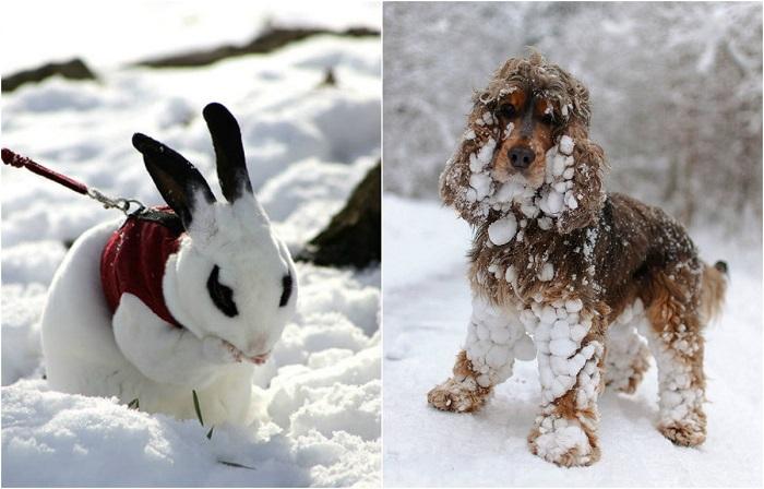 Реакция животных на знакомство со снегом.