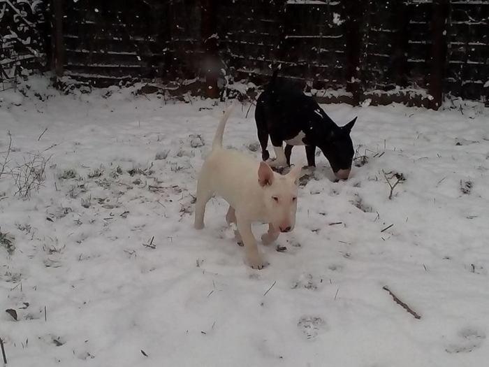 Заводные и потешные Кики и блондин Антей на первой зимней прогулке со снегом.