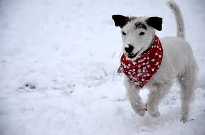 Для зимних прогулок кое-кто не прочь утеплиться – так можно дольше бегать по удивительному снегу.