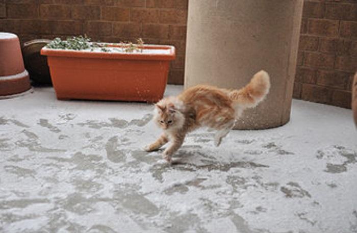 Хозяин, этот снег холодный!