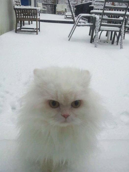 «Нашу кошку снег совершенно не впечатлил – ей хотелось поскорее вернуться в дом».