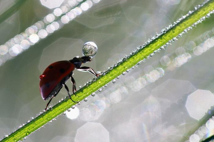 Утренний запас воды. Автор фотографии: Nicolas Reytet.