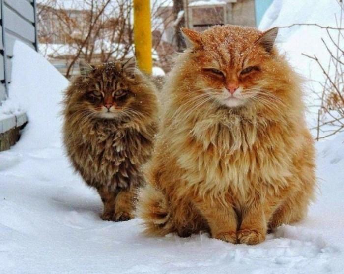 Зимой животным лучше всего: от мороза их спасает густая шерсть.