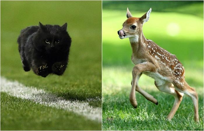 Животные, которые про против заняться спортом.