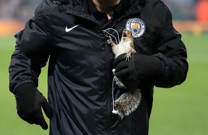 На стадион «Этихад» в Манчестере был спасен бельчонок во время матча. Автор фотографии: Matthew Ashton.