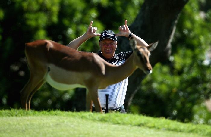 Зеленая трава, выращенная на гольф-поле, привлекла внимание молодого оленя. Автор фотографии: Warren Little.