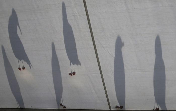 Чайки отбрасывают черные тени на крыше, где проводится чемпионат по гольфу. Автор фотографии: Phil Noble.