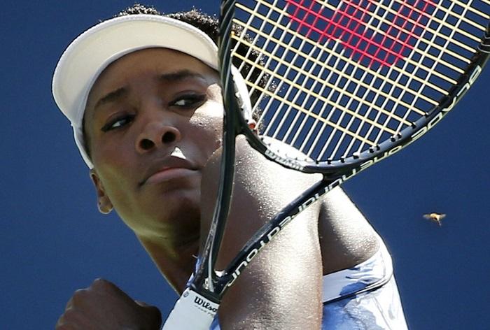 Пчела отвлекает теннисистку Винус Уильямс от игры на корте. Автор фотографии: Elise Amendola.